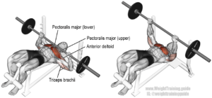 Decline-Barbell-Bench-Press- chest exercises