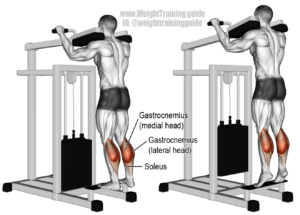 Lever Standing Raise calf exercises