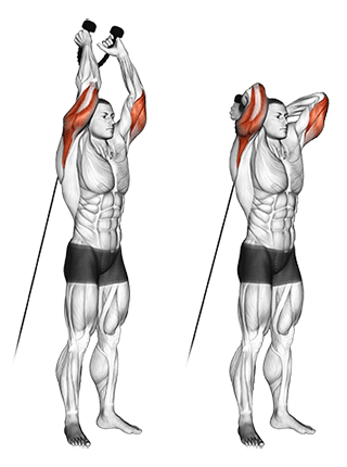 Triceps Exercises For Mens - Best Triceps Workouts