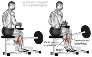 Seated-raise-Calf-exercises