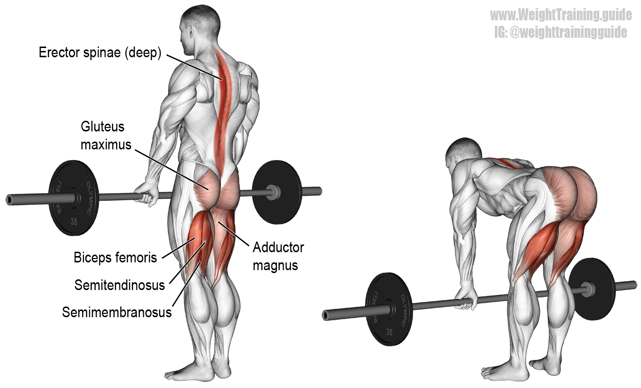 barbell-straight-leg-deadlift