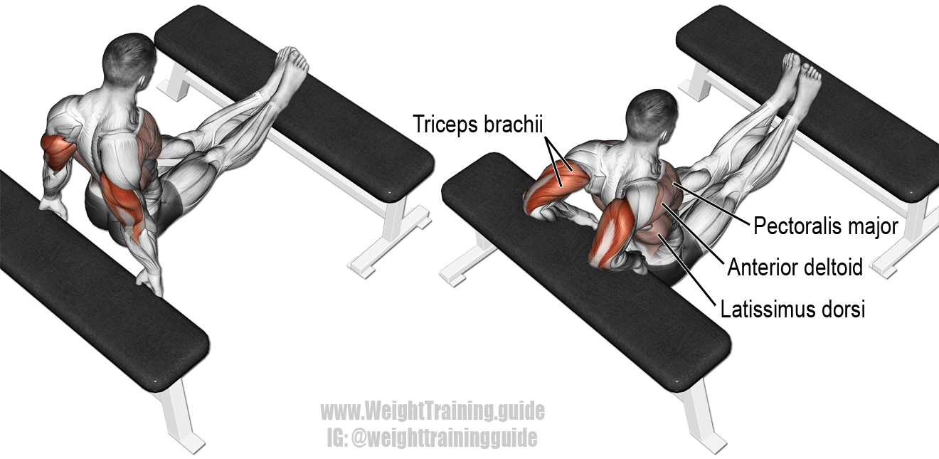 Triceps Exercises For Mens Best Triceps Workouts