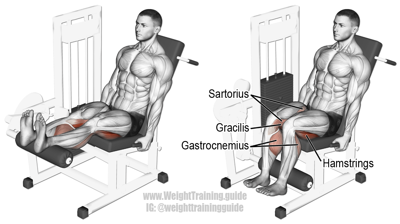seated-leg-curl hamstrings exercises